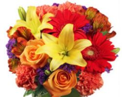 Gladstone Flowers