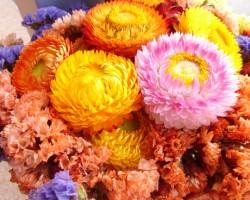 Sharps Flowers