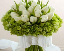 Elixir Floral Design Inc.