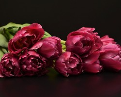 Florabella Designs